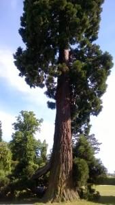 arbre nokia 14