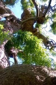 branches nokia1 - copie