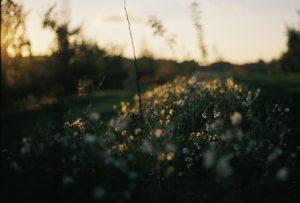 Life-of-Pix-free-stock-photos-wild-Ciderhill-flowers-Doug-Robichaud