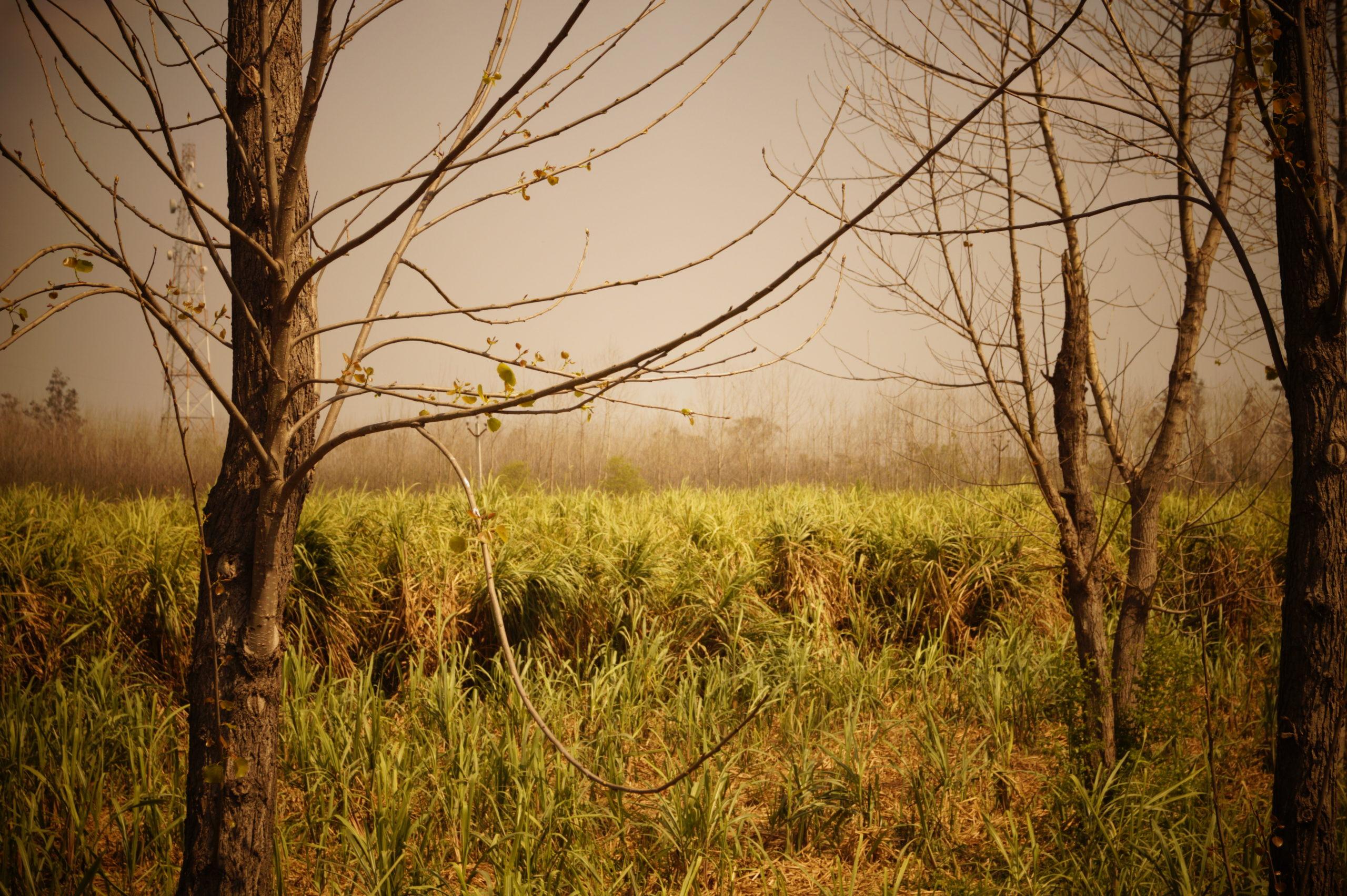 Life-of-Pix-free-stock-photos-fields-nature-trees-mist-aman-goyal